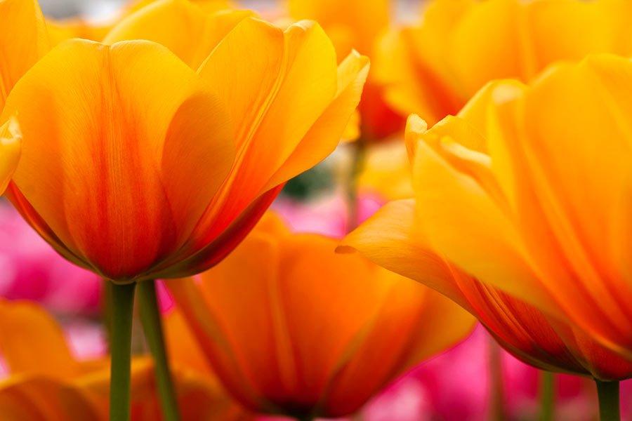 Mercado de las flores Amsterdam