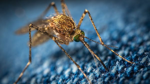 anti mosquitos tailandia