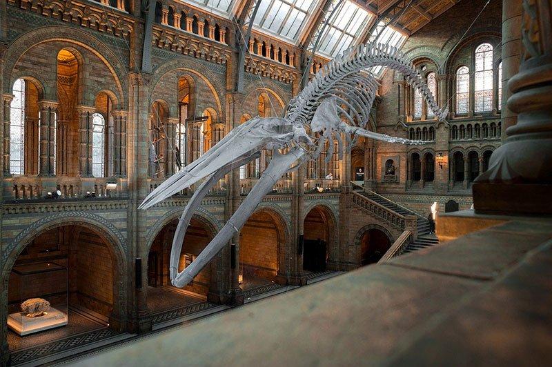 museo de historia natural, natural history museum