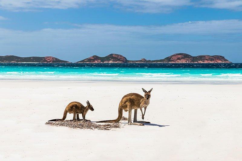 Lucky Bay Australia, playas de australia mas bonitas